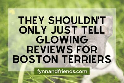 Boston Terrier puppy lying in a field