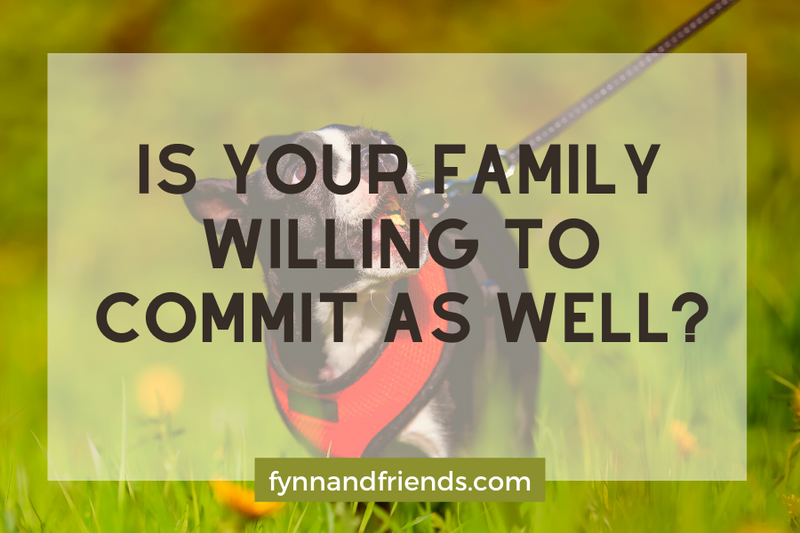 Is your family willing to commit as well? with boston terrier on a leash in background