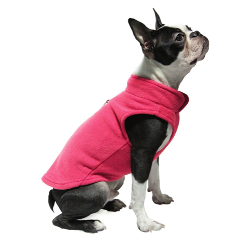 How to Dress Your Boston Terrier in Winter