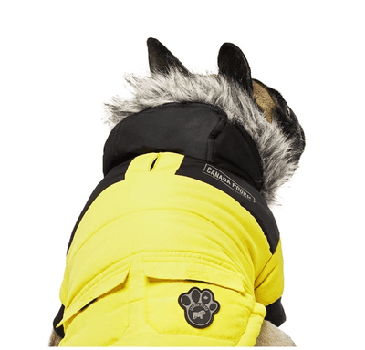 boston_terrier_parka