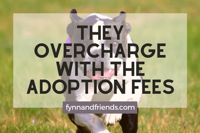 They overcharge with the adoption fees