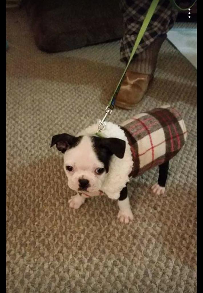 Puppy_winter_coat_canada