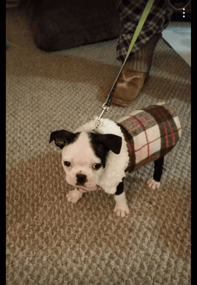 Puppy_winter_coat_canada