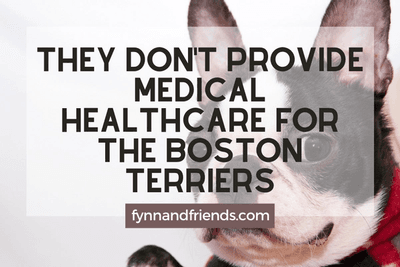 They don't provide medical healthcare for the Boston Terriers