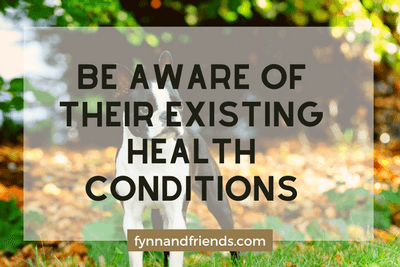 Be aware of their existing health conditions. with boston terrier standing and autumn leaves in background