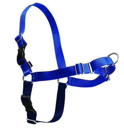 boston_terrier_harness