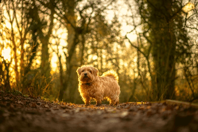 small dog in the woods