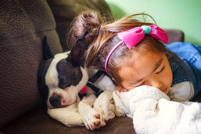 Boston Terrier and little girl cuddling together on a couch