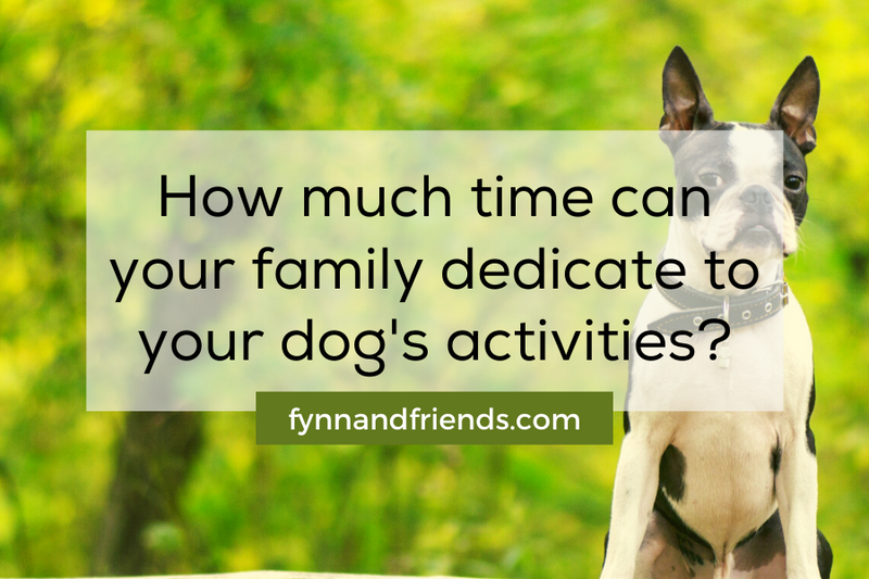 How much time can your family dedicate to your dog's activities? terrier breeds background