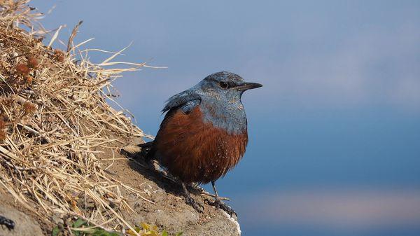 Photo of a bird in Jeju Island