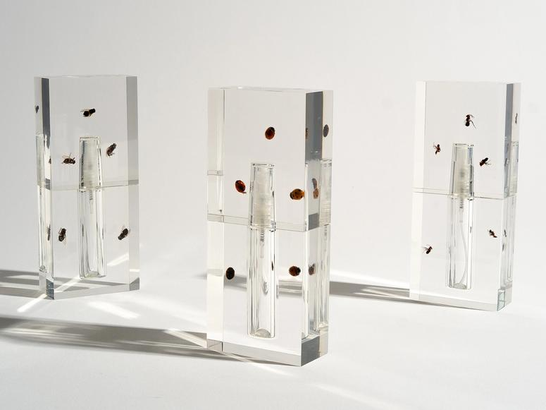 Three clear perfume vials with insects encased in their glass stand on a white backdrop.