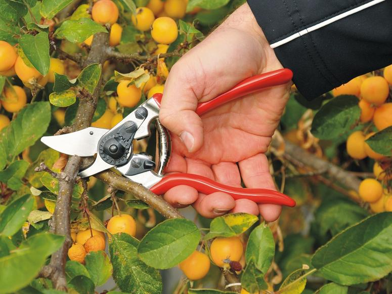 A pair of Felco shears cutting a small branch.