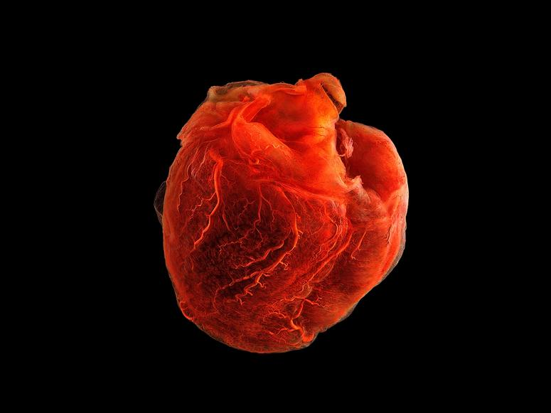 A red human heart on a black background.