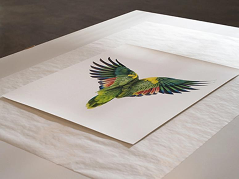 A single edition of a parrot photographed from behind.