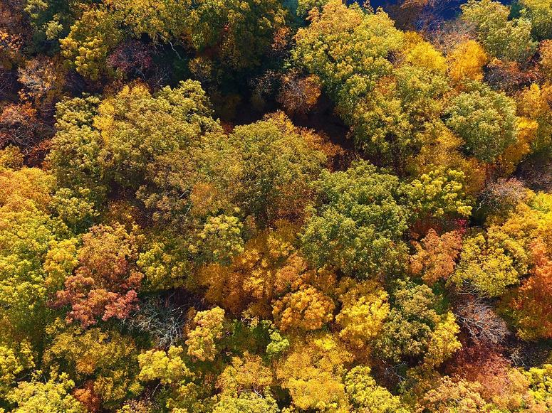 Autumn trees viewed from above.