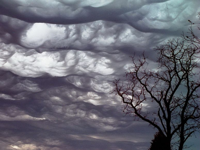 Rolling clouds above a tree.