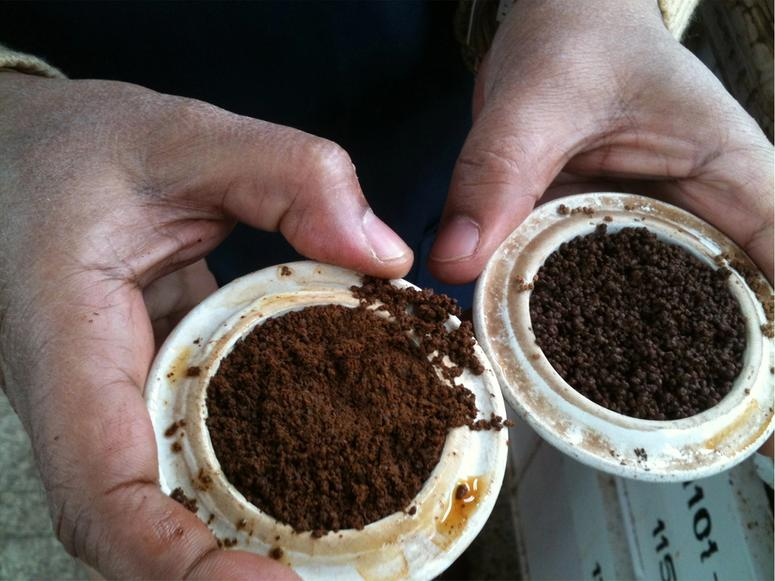 Two hands holding ground tea leaves in white cups.