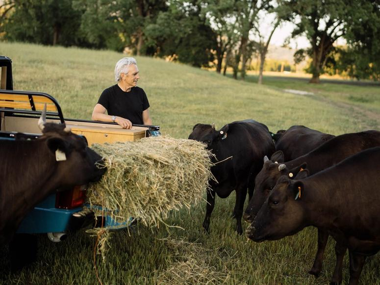 A man feeding cows hay in a field from the back of a truck