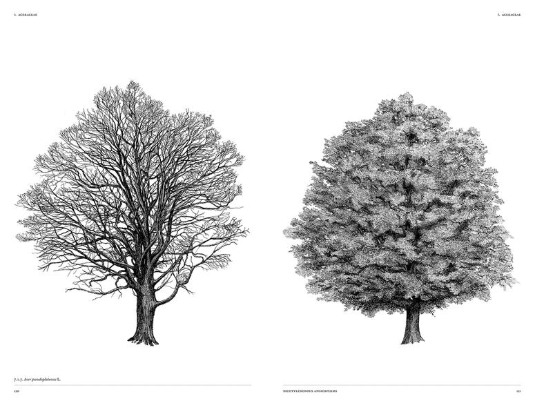 Illustration of a tree with leaves next to a tree without leaves