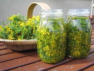 medicinal herbs in jars