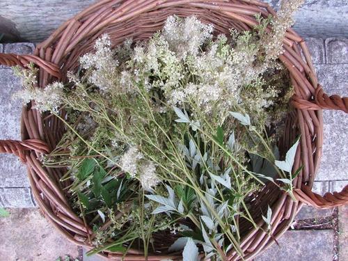 meadowseet herb