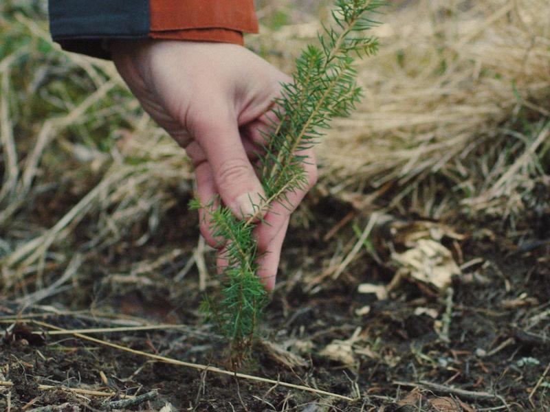 Det nytter ikke bare å plante, vi må også hogge