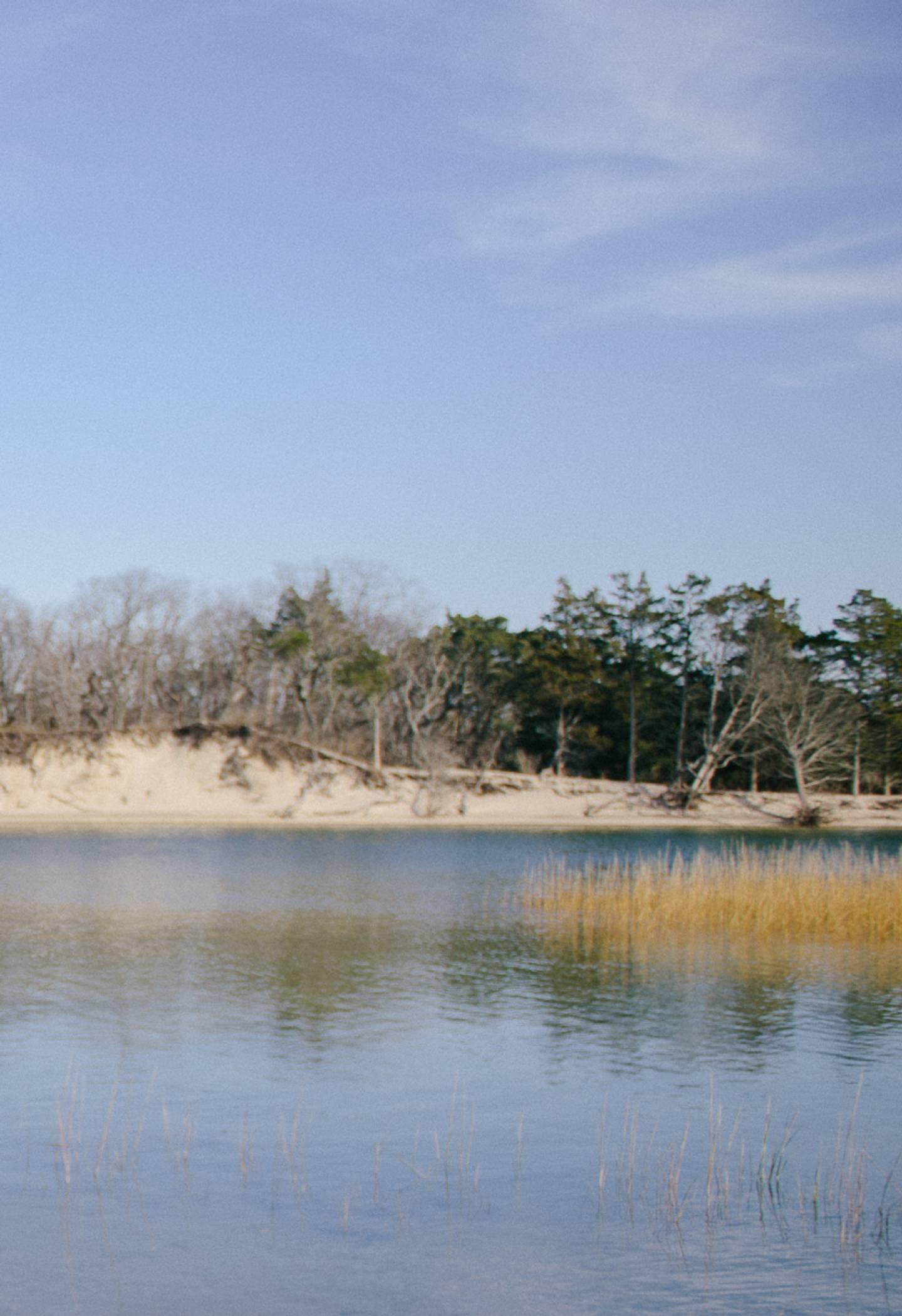 beach marsh with blue sky