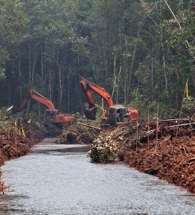 Peatland forest clearance in Kalimantan