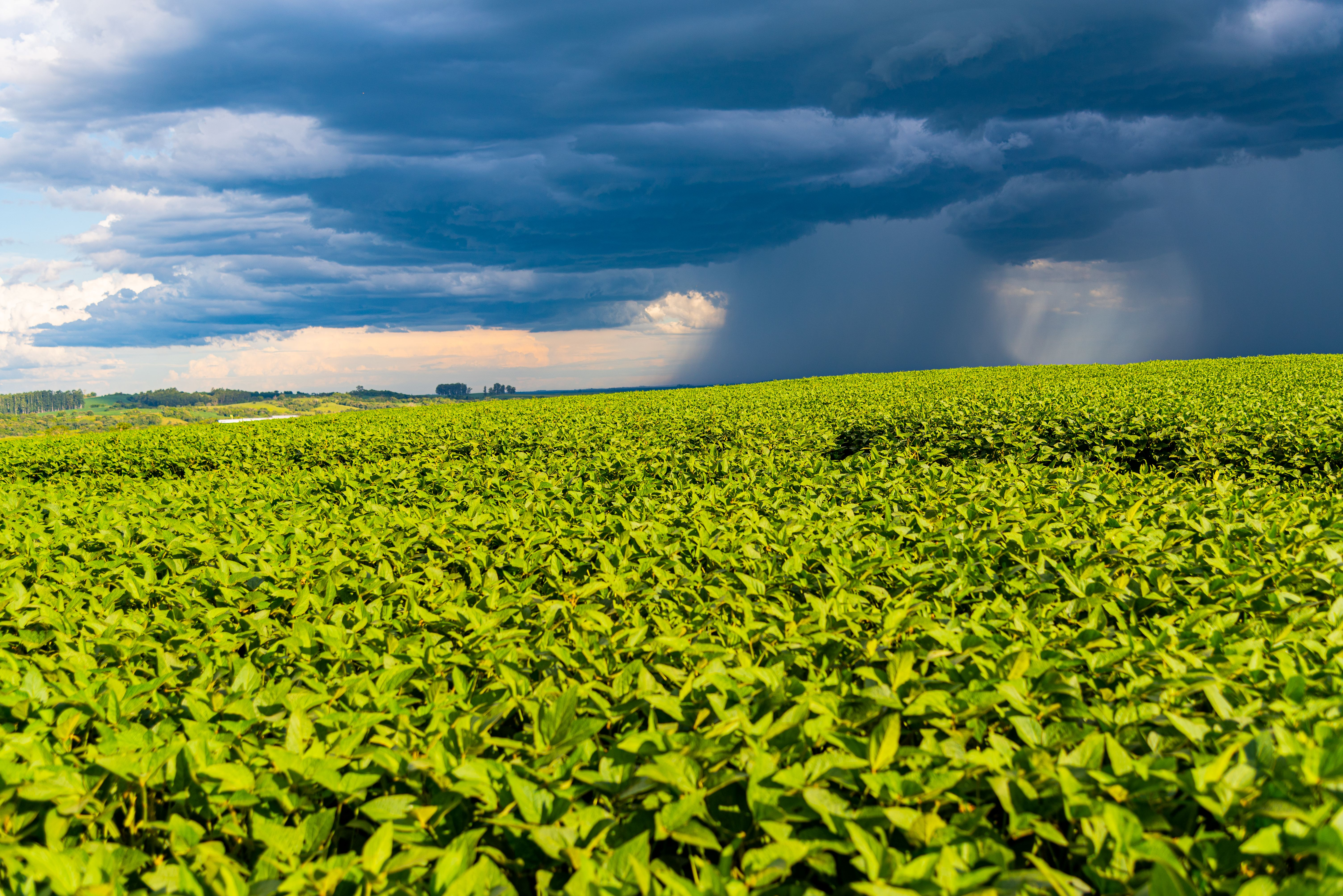 Storm over a soy plantation