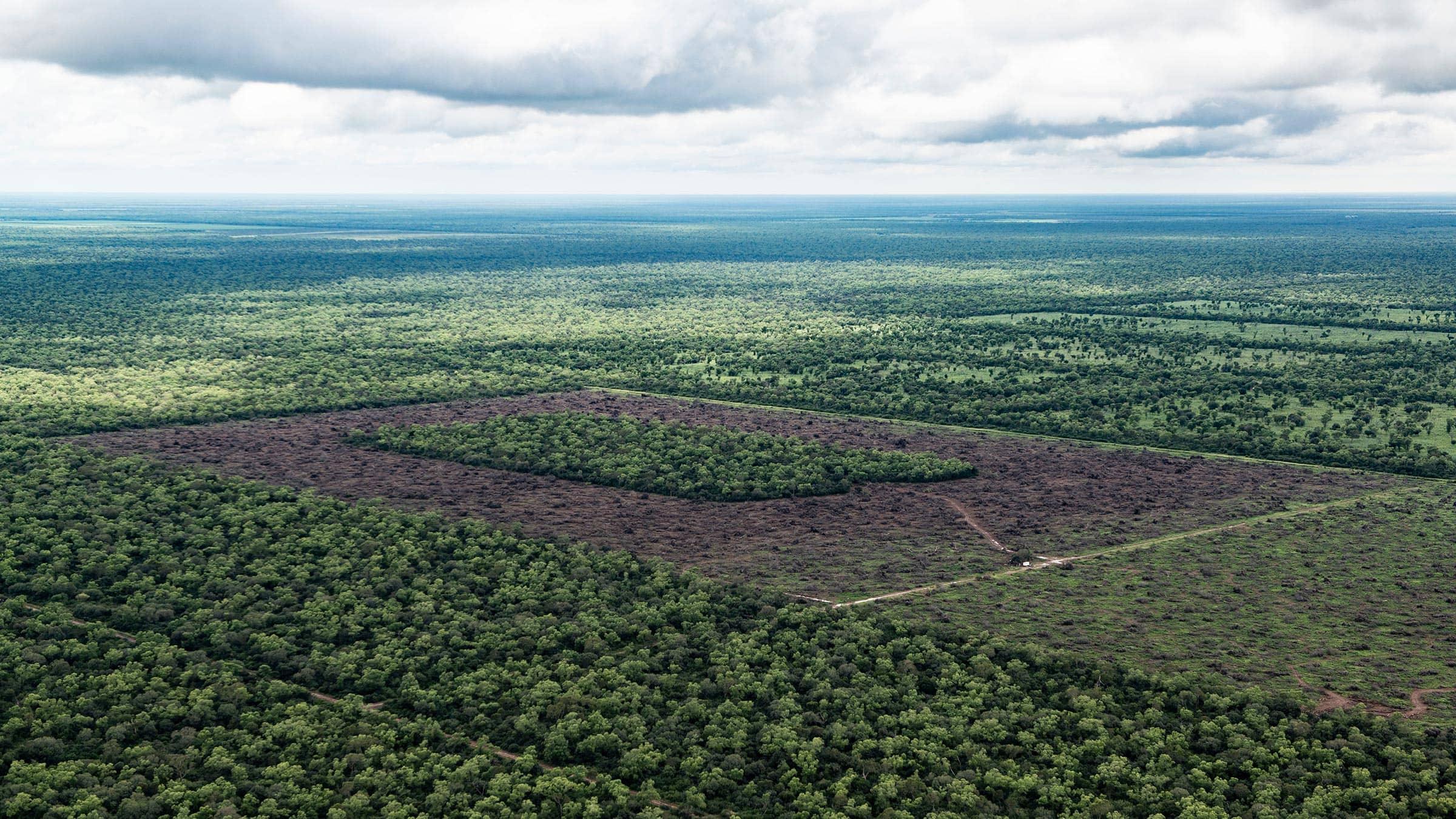 Deforested landscape