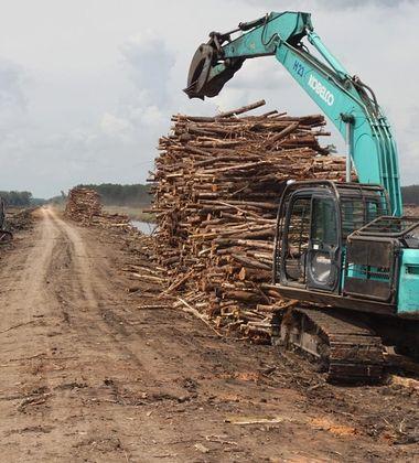 Deforestation in West Kalimantan