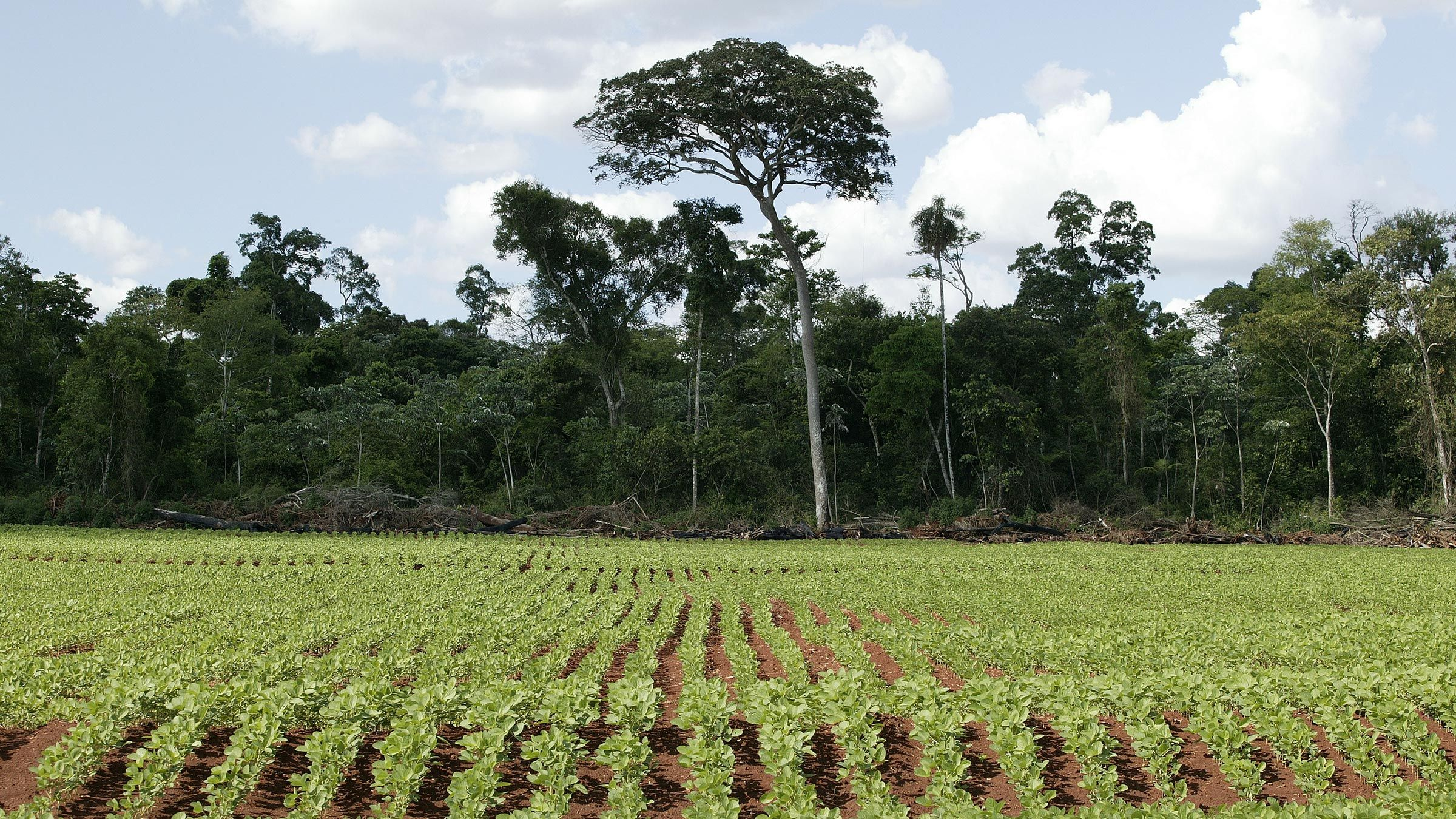 SOY PRODUCTION IN PARAGUAY