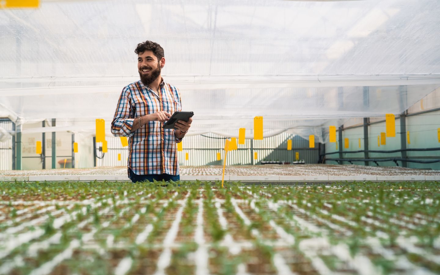 Smiling man in a greenhouse with green produce growing
