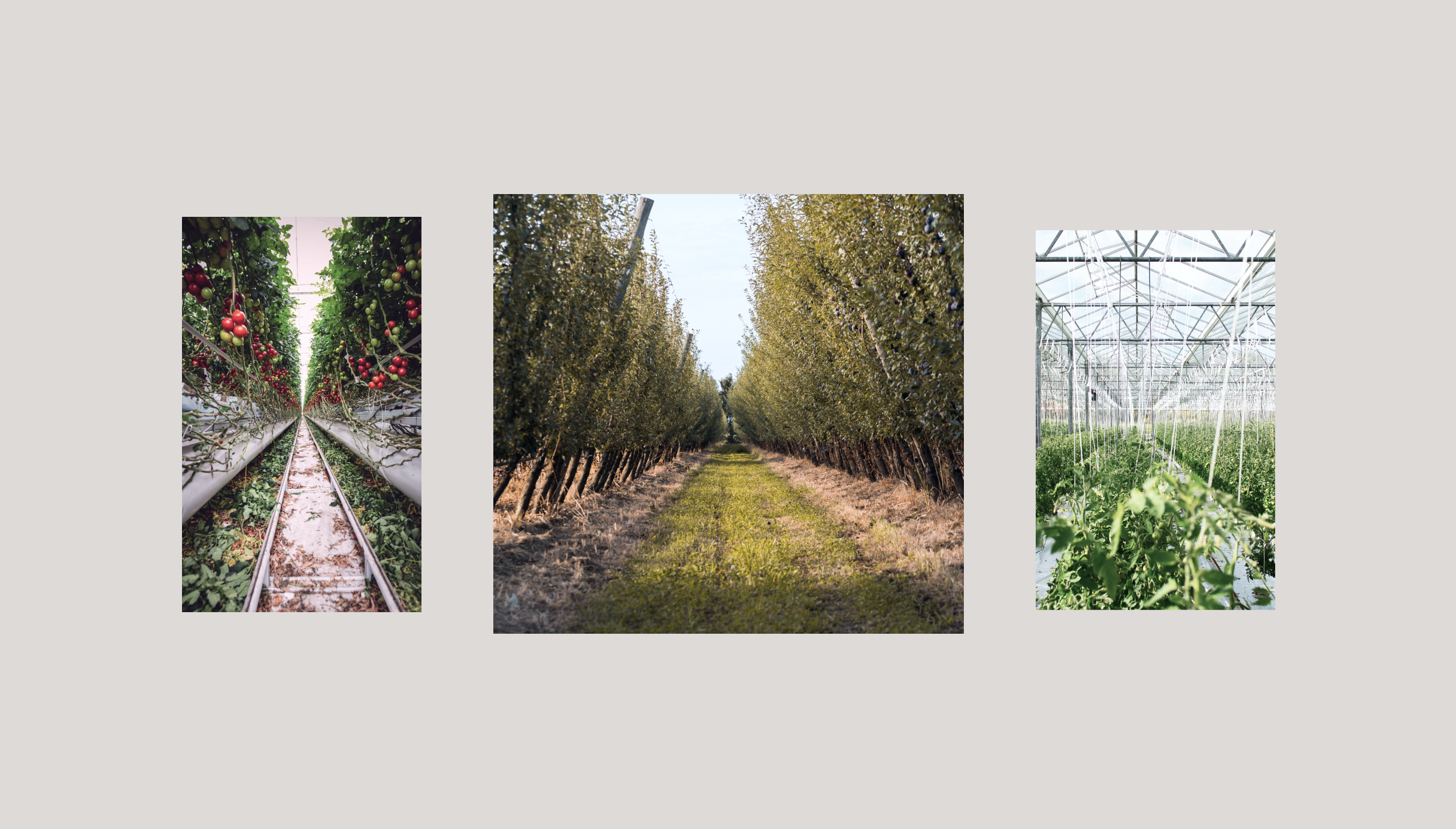 Three images taken of various greenhouses and vineyards