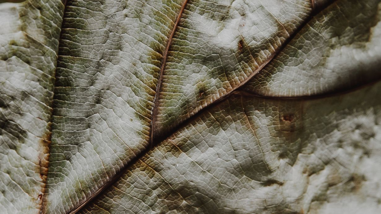 Close-up textures of a dried leaf.