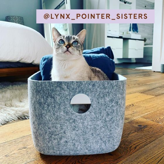 Image for UGC - @lynx_pointer_sisters - Large Felt Bins