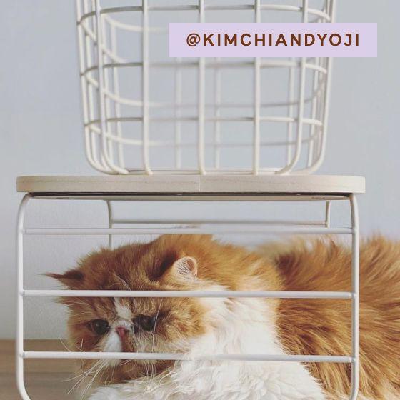 Image for UGC - @kimchiandyoji - Shelf Risers
