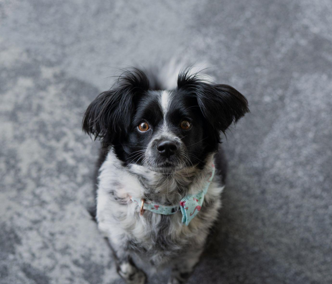 Dexter, April Lueben's Pup