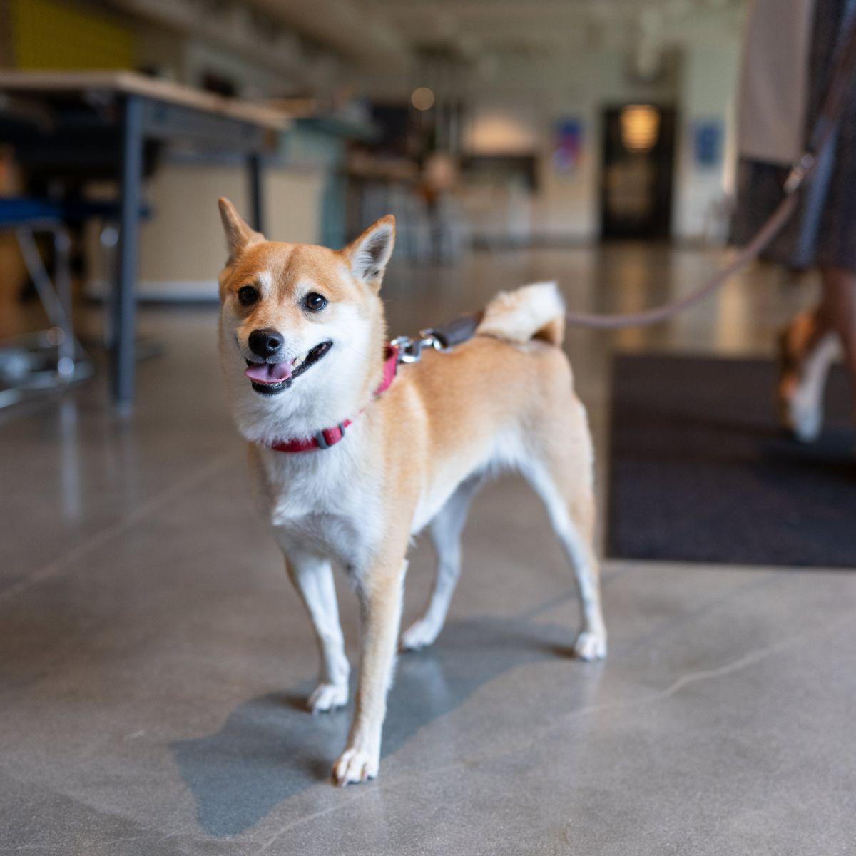 Kira, Heather Bown's Pup