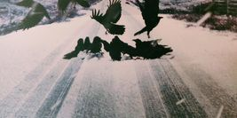 Cover detail from Raven Black by Ann Cleeves showing ravens on a snowy road