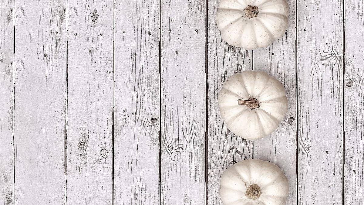 Image of 3 white Pumpkins
