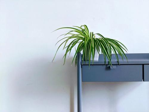 Spider plant on a desk - photo by Lucian Alexe on Unsplash