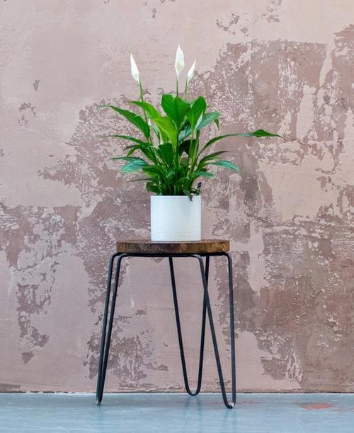 Photo of peace lily on a stand by Max Williams on Unsplash