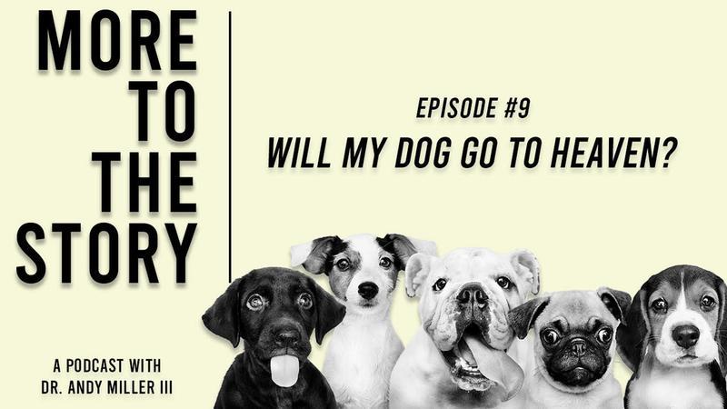 Spiritual Warfare Studied ? Will My Dog Be In Heaven?