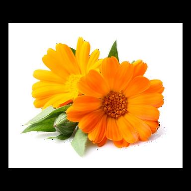 fiori di calendula