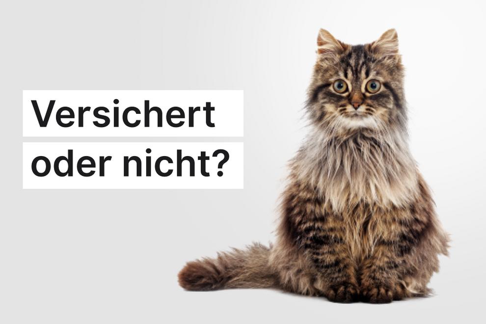 Ist die teure Kristallvase von der Hausratversicherung abgedeckt, wenn deine Katze sie umwirft und zerstört?