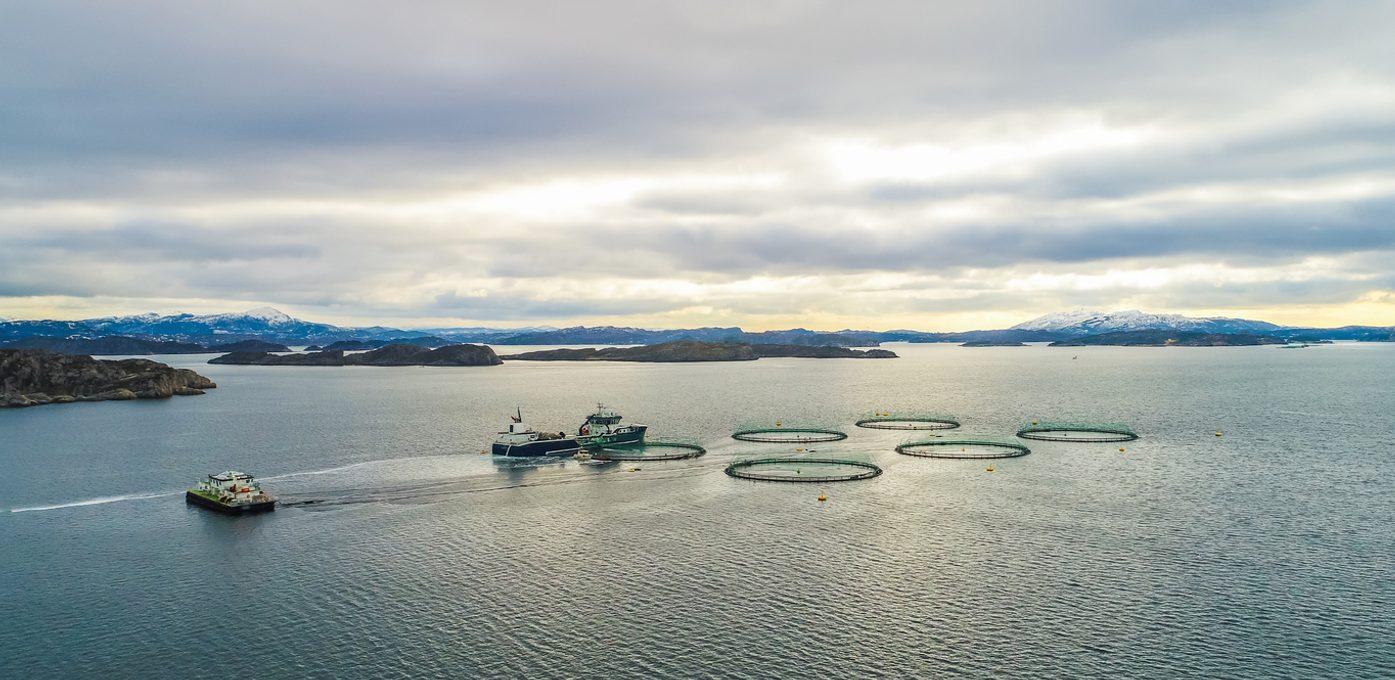 Vil du løfte fram Vestland som fiskerifylke?
