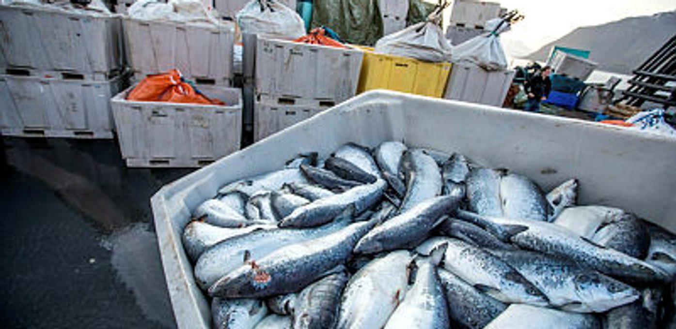 Fiskeridirektoratet Region Vest Hovedbilde