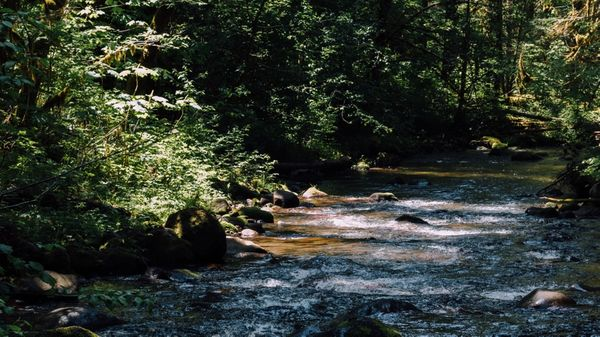 River surrounded by trees
