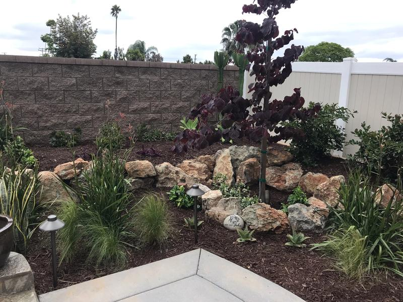 low water landscaping San Diego